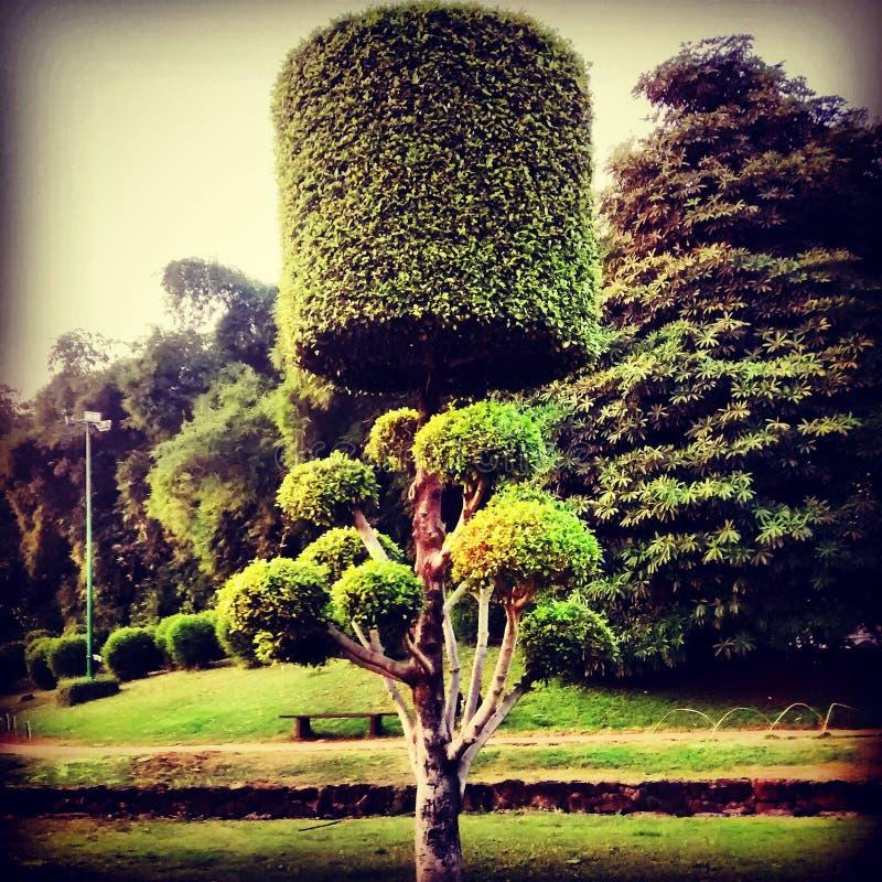 Jardim do jardim fotografia de stock royalty free