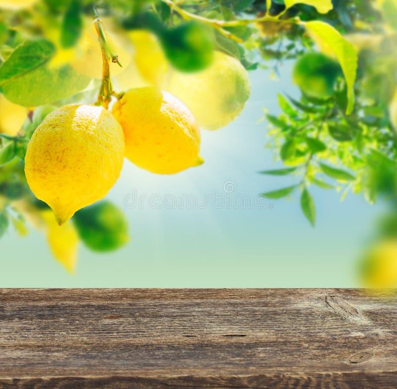 Jardim do limão com friuts imagem de stock royalty free