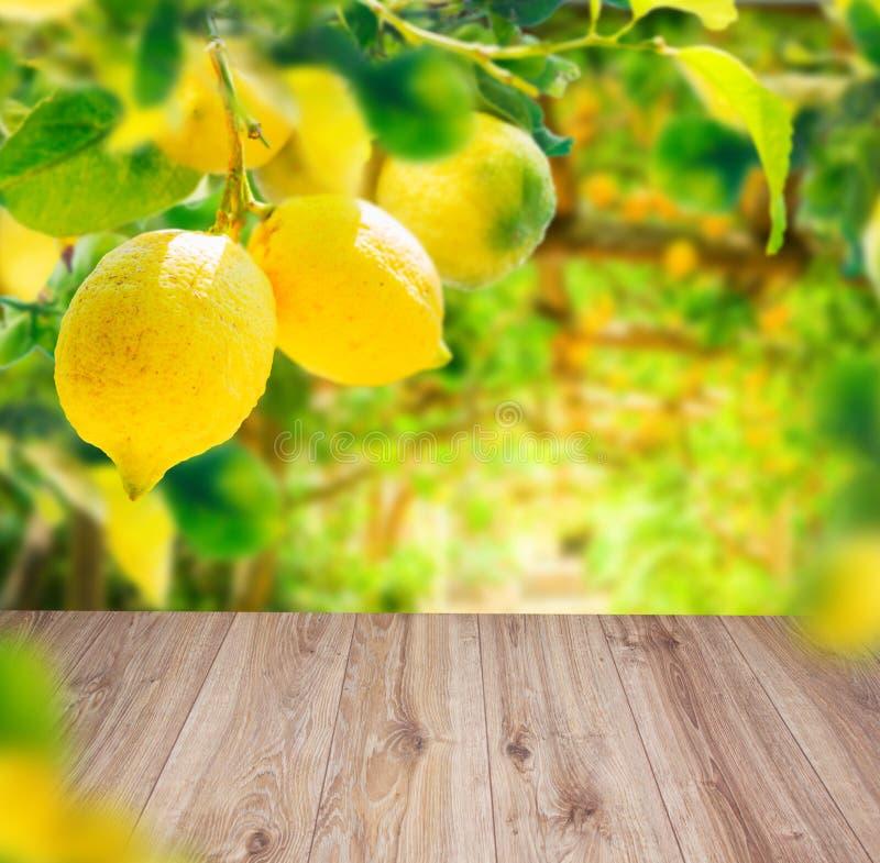 Jardim do limão com friuts imagem de stock
