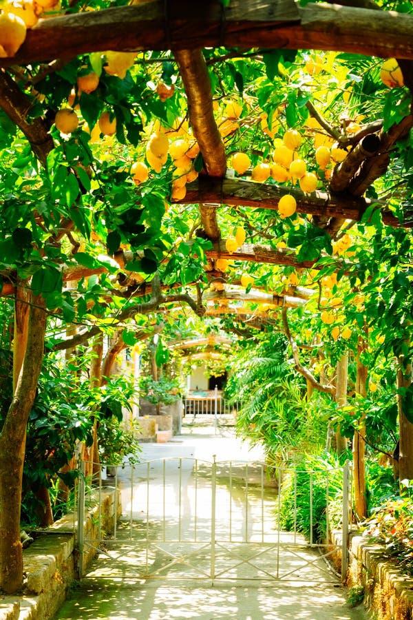 Jardim do lim?o de Sorrento fotos de stock