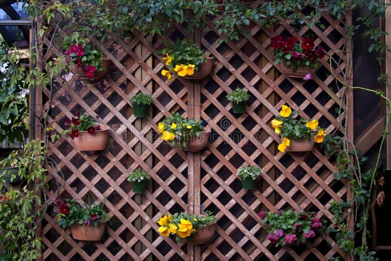 Jardim do quintal imagens de stock