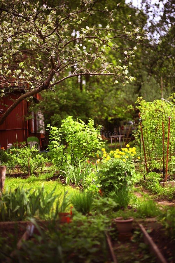 Jardim do Simmer com flores e sementeira imagens de stock