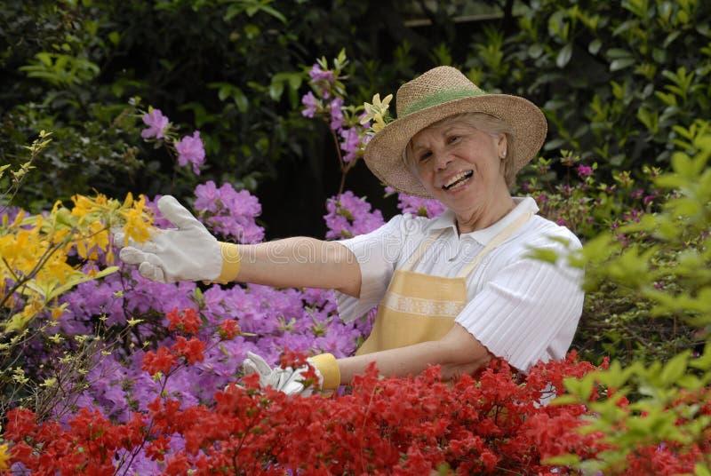 Jardim doce. foto de stock royalty free