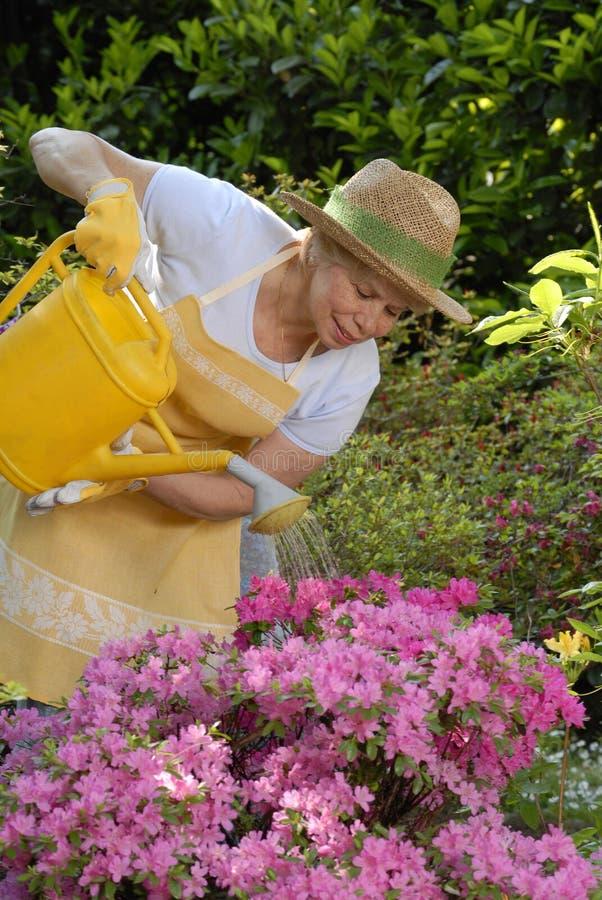 Jardim doce. fotos de stock
