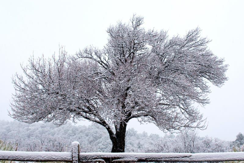 Jardim dos deuses, Colorado Springs, na neve imagens de stock