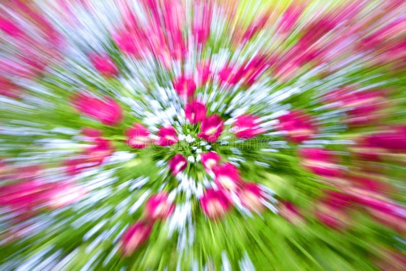 Jardim dos Tulips imagem de stock royalty free