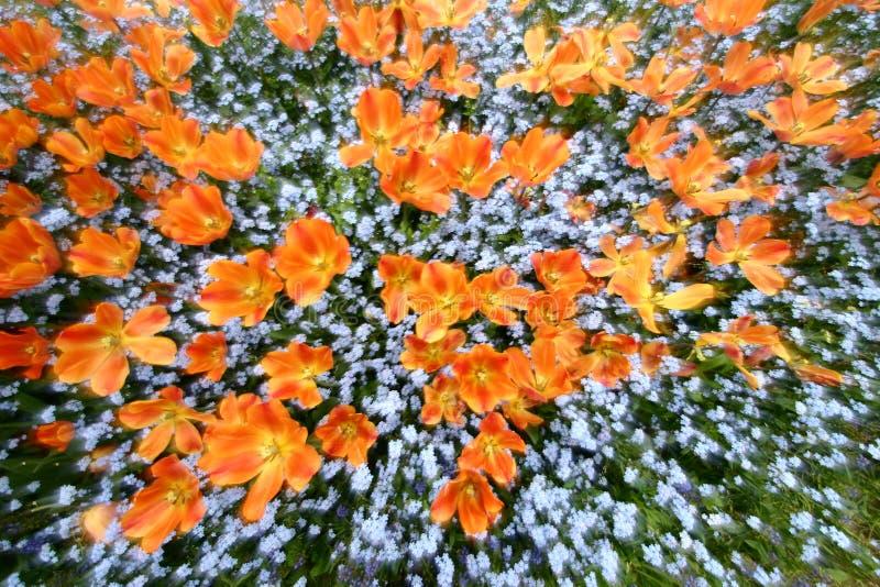 Jardim dos Tulips imagem de stock