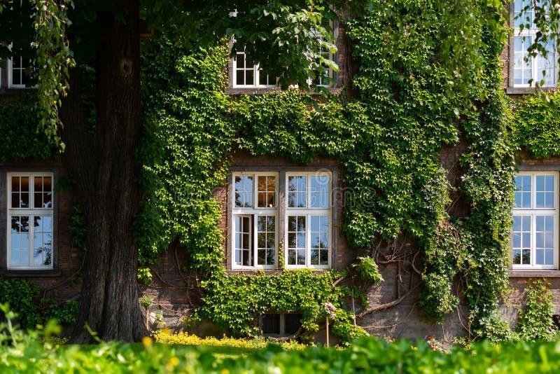 Jardim e casa com as janelas nas uvas em Krakow perto do castelo de Wawel, Polônia imagens de stock royalty free