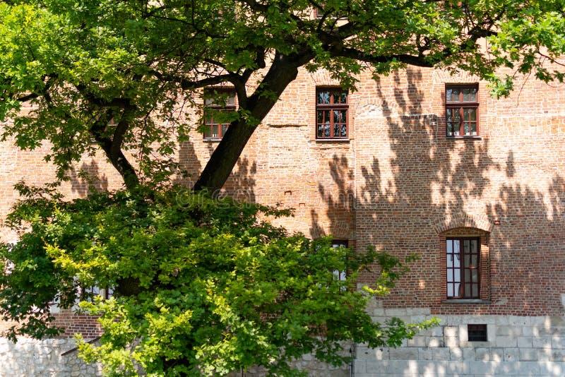 Jardim e casa com as janelas nas uvas em Krakow perto do castelo de Wawel, Polônia fotos de stock royalty free