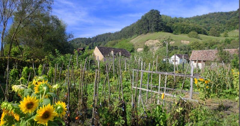 Jardim e construções na vila saxona, a Transilvânia, Romênia imagens de stock royalty free