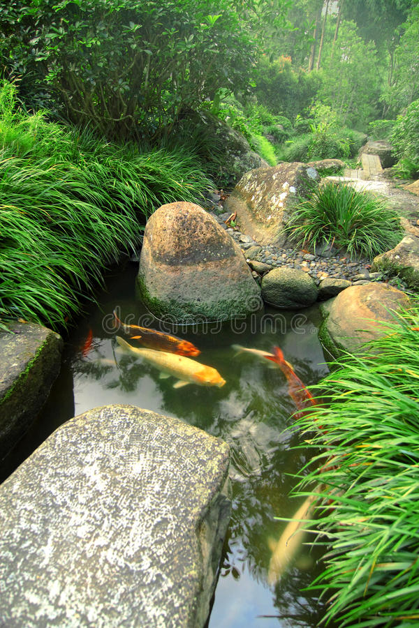 Jardim e lagoa japoneses de Koi imagem de stock