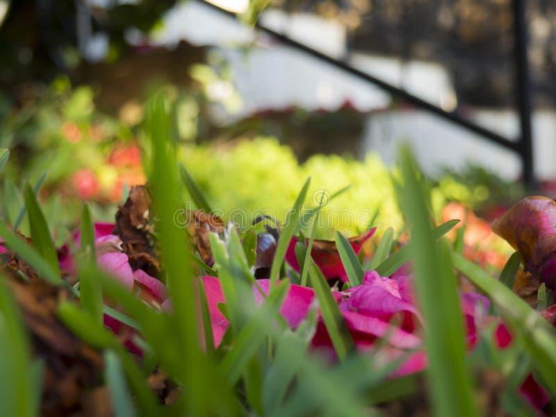 Jardim em Reunion Island imagens de stock