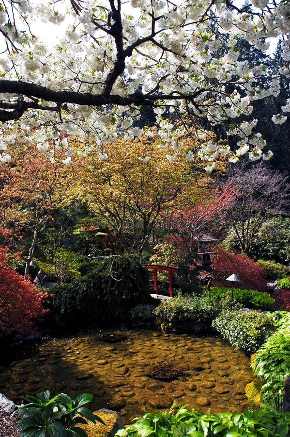 Jardim em Vancôver, Canadá fotos de stock royalty free