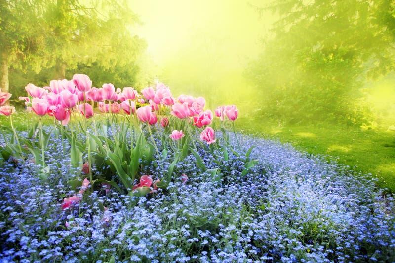 Jardim ensolarado misterioso fotos de stock