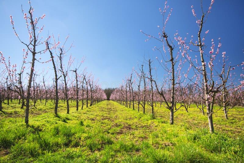 Jardim florescido do fruto imagens de stock royalty free