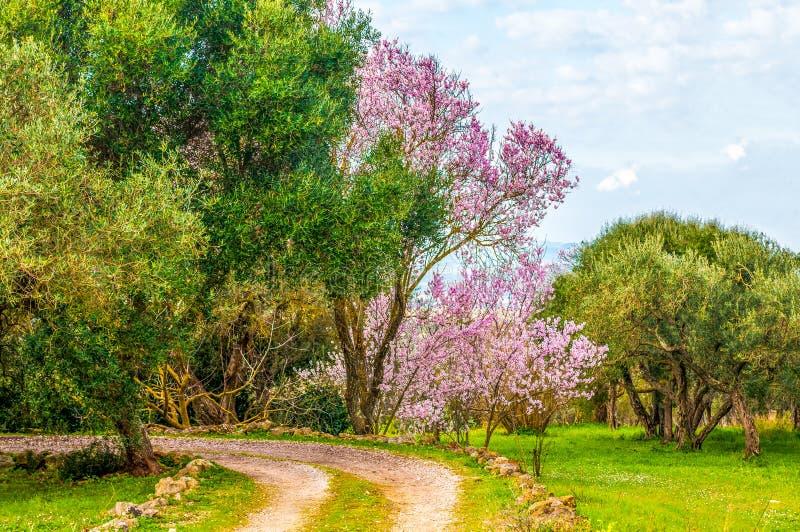 jardim florescido na mola imagens de stock royalty free