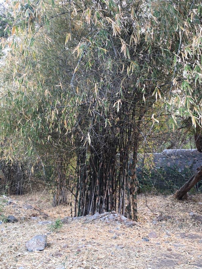 Jardim indiano fotografia de stock royalty free