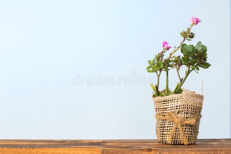 Jardim interno adorável do cacto fotografia de stock royalty free