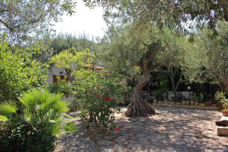 Jardim italiano imagens de stock royalty free