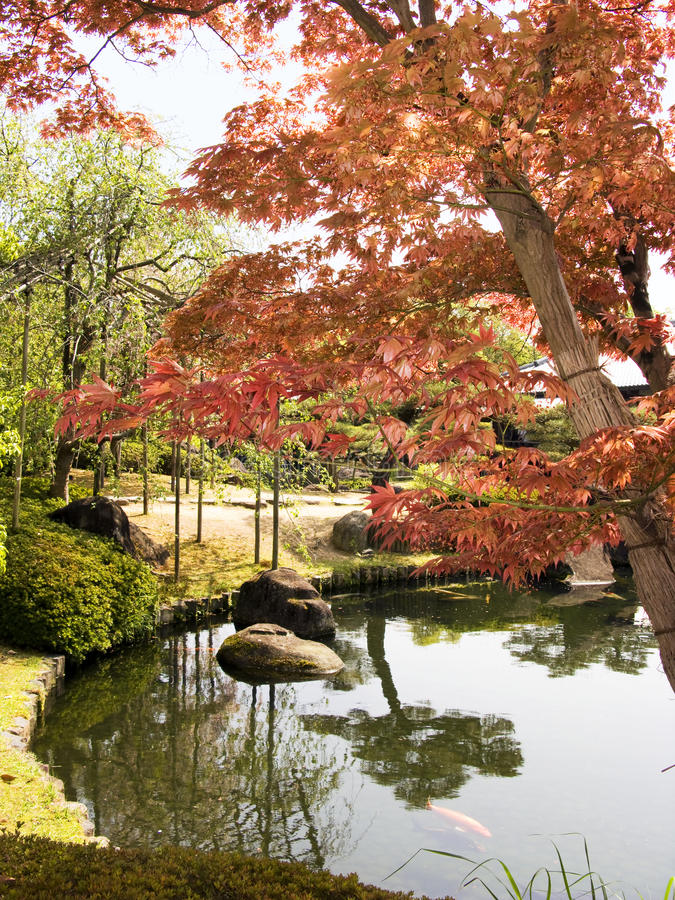 Jardim japonês com árvore de bordo fotografia de stock