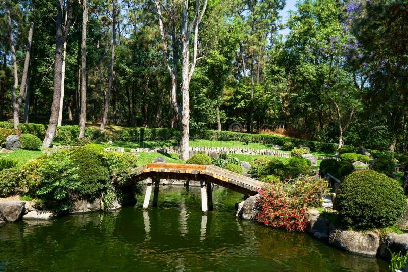 Jardim japonês da floresta de Colomos Jalisco fotos de stock