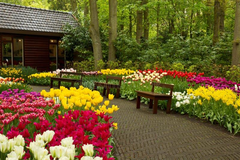 Jardim Keukenhof da mola, Holland fotos de stock