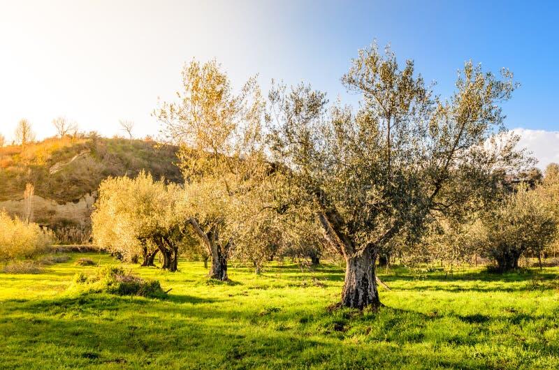 Jardim mediterrâneo, close up o ramo foto de stock