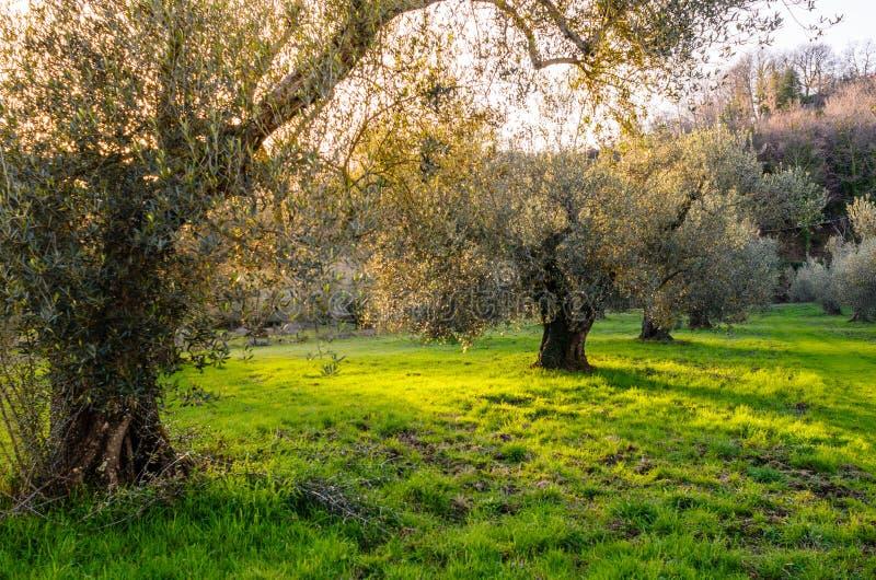Jardim mediterrâneo, close up o ramo fotografia de stock