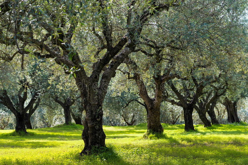 Jardim mediterrâneo, close up o ramo fotografia de stock royalty free