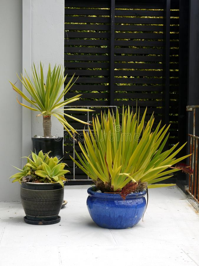 Jardim modernista: plantas potted subtropicais foto de stock royalty free