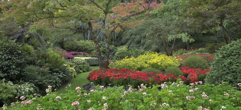 Jardim multi-colour decorativo. foto de stock