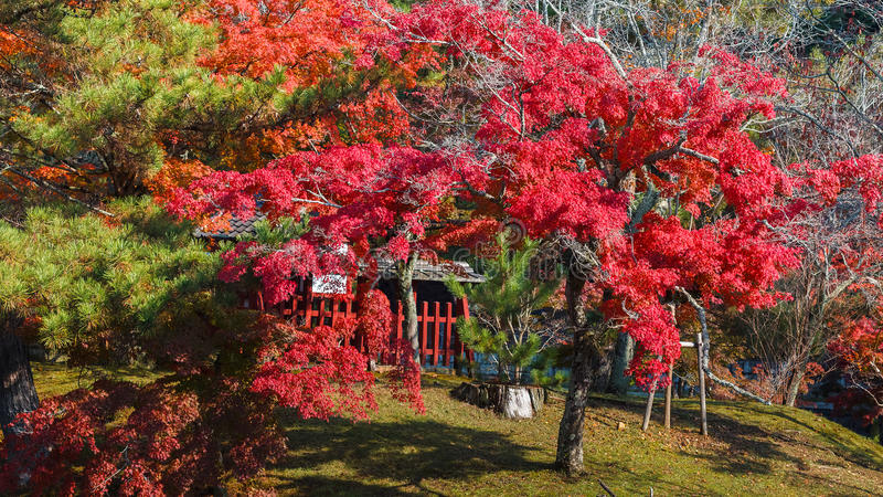 Jardim na frente do templo de Todaiji em Nara foto de stock