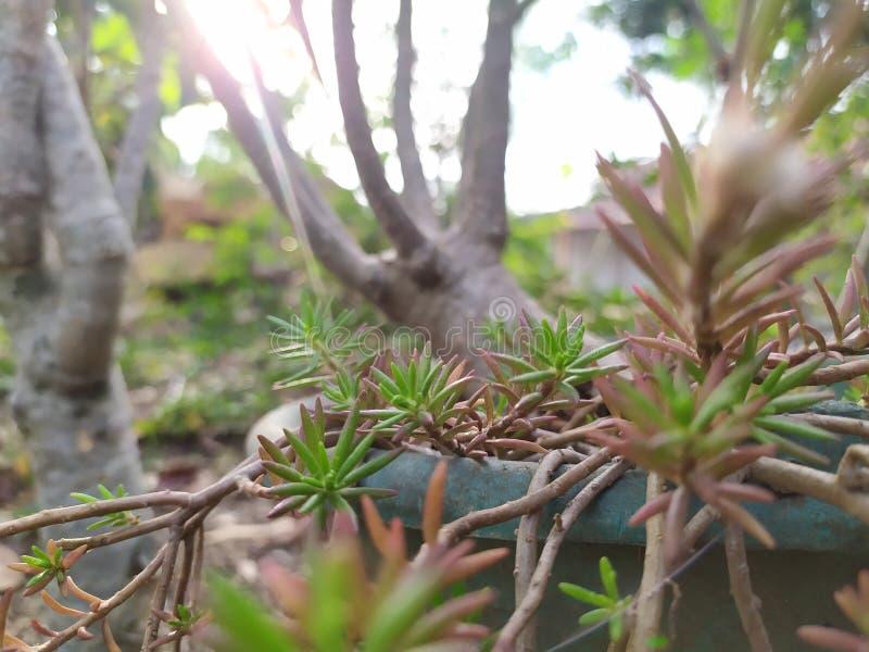 Jardim na manhã - fotografia móvel foto de stock royalty free