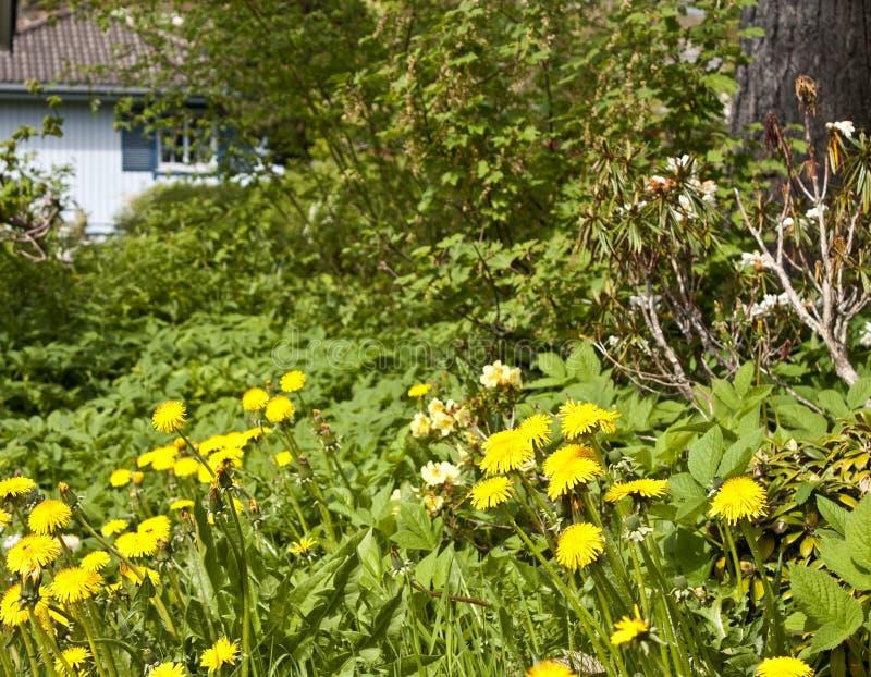 Jardim negligenciado fotos de stock