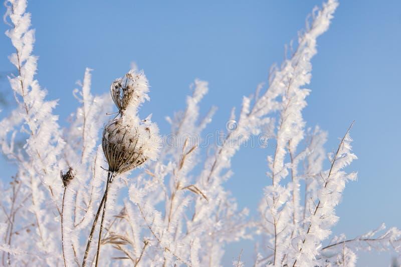 Jardim no inverno fotografia de stock royalty free