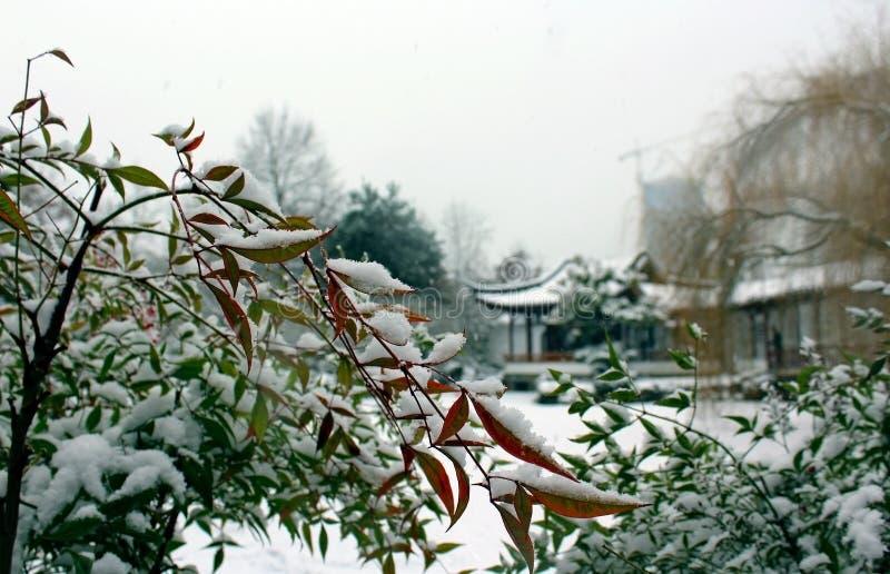 Jardim no inverno imagem de stock