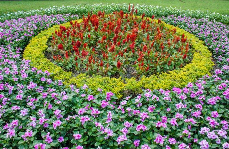 Jardim no norte de Tailândia fotografia de stock royalty free
