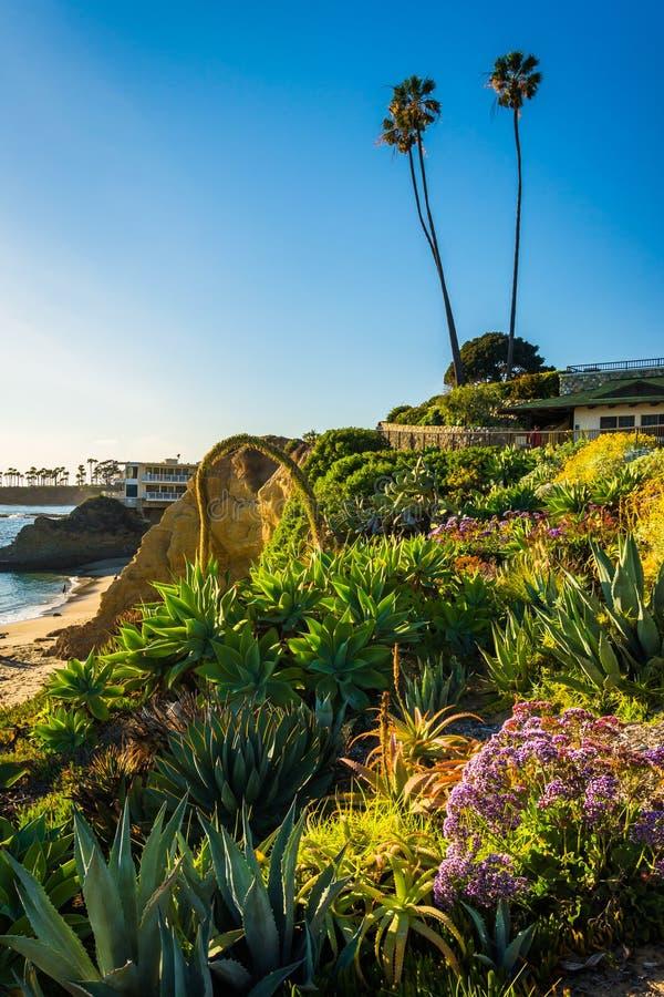 Jardim no parque de Heisler, no Laguna Beach fotos de stock royalty free