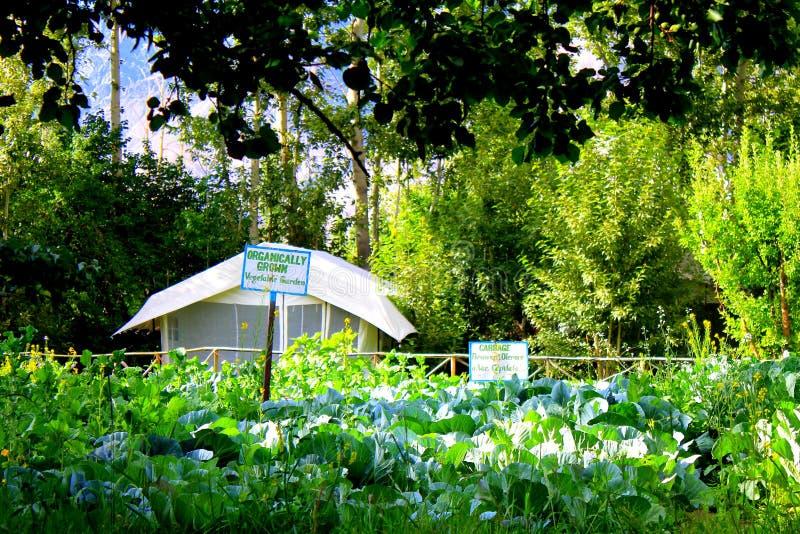 Jardim orgânico fotografia de stock