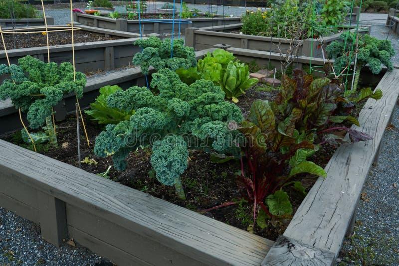 Jardim orgânico da comunidade imagem de stock