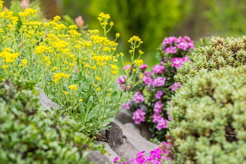 Jardim ornamental decorativo de florescência foto de stock royalty free
