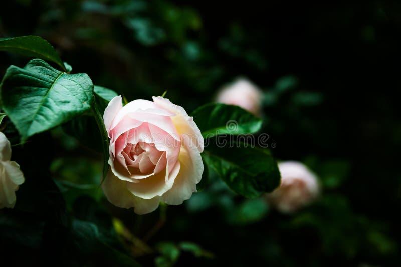 Jardim público inglês no verão imagem de stock royalty free