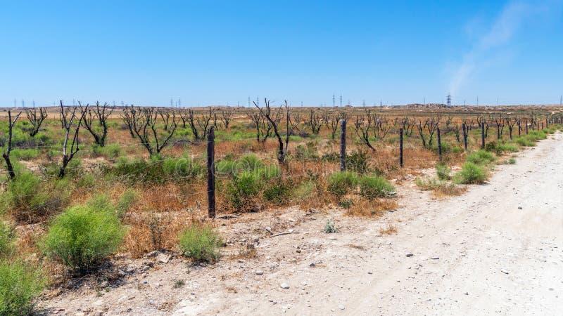 Jardim seco em climas áridos quentes fotos de stock