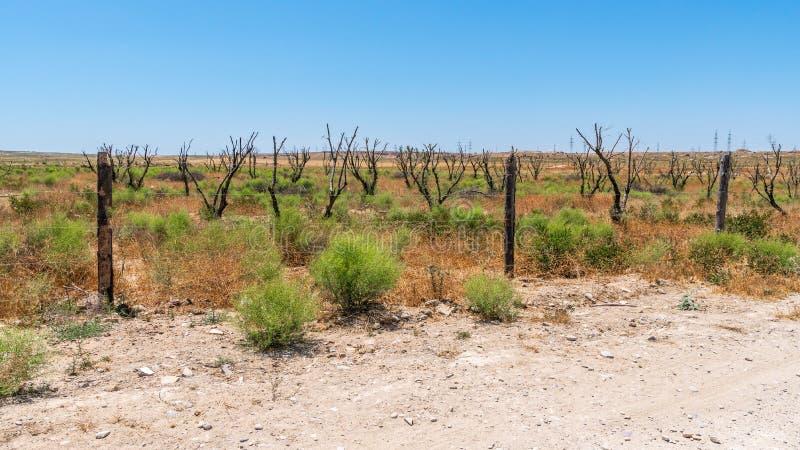 Jardim seco em climas áridos quentes fotografia de stock