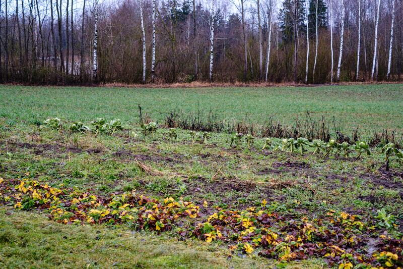 jardim tardio do outono com vegetais congelados fotos de stock royalty free
