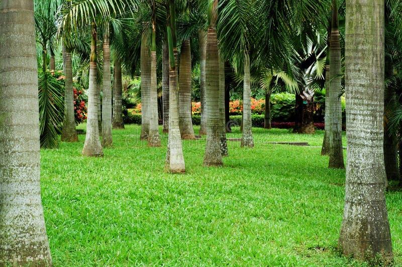 Jardim tropical imagem de stock
