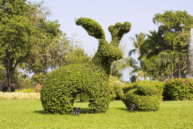 Jardim tropical em Tailândia fotografia de stock royalty free