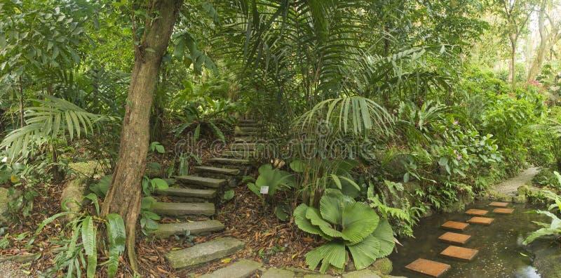 Jardim tropical, Malásia foto de stock royalty free