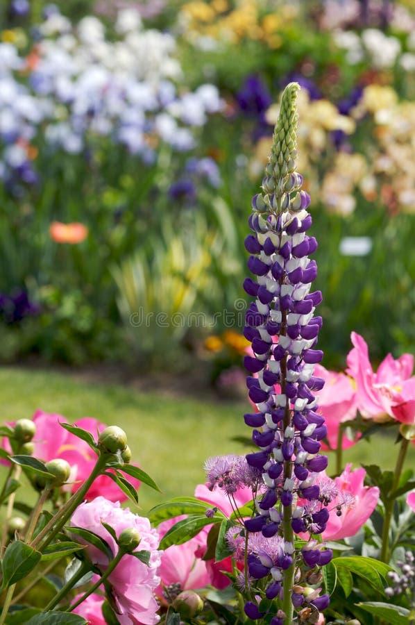 Jardim - variedade fotografia de stock royalty free