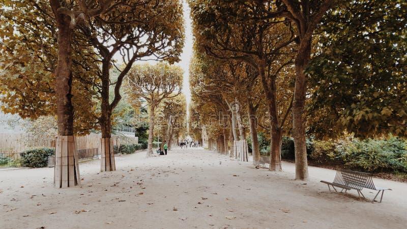Jardim vazio bonito, corredor da árvore, vazio imagem de stock royalty free